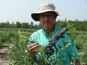 Dick Griffis showing blueberries